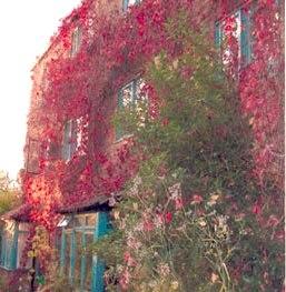 Argyle Street Housing Co-op gardens