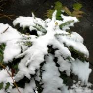 Snowy plants