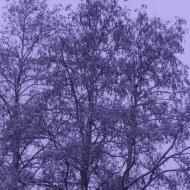 Trees by the bridge