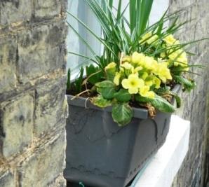 11 primrose windowbox