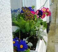 3 Colourful windowbox